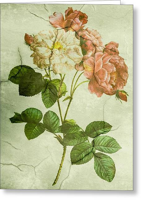 Shabby Chic Pink And White Peonies Greeting Card