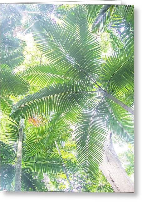 Shade Of Eden  Greeting Card