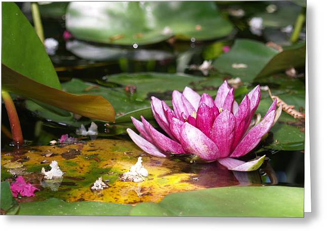 Shaded Lotus Greeting Card