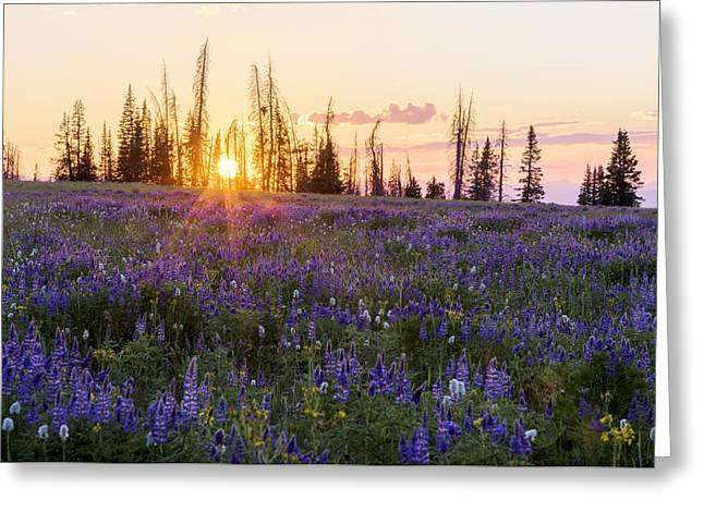 Shades Greeting Card by Chad Dutson