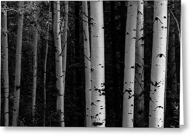 Greeting Card featuring the photograph Shades Of A Forest by James BO Insogna