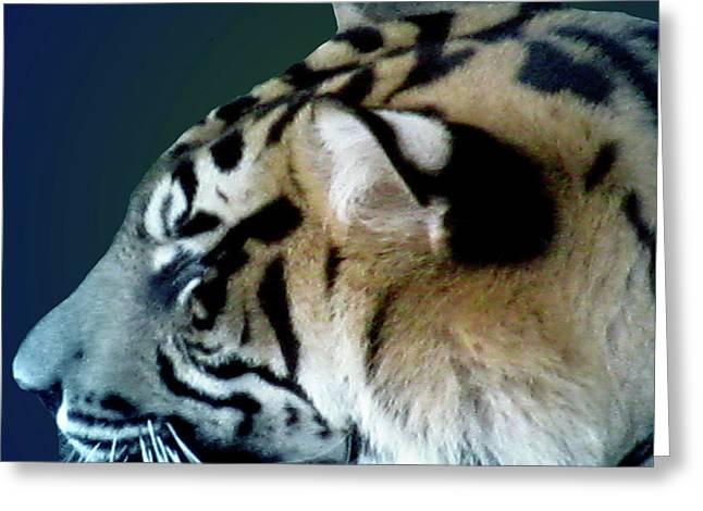 Shades Of A Tiger  Series Greeting Card by Debra     Vatalaro