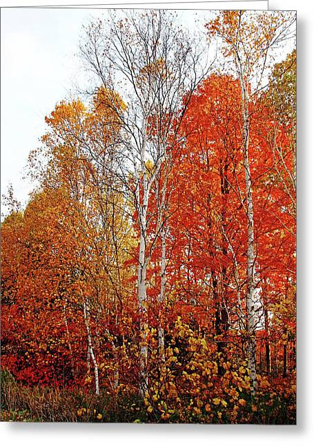 Shades Of Autumn Greeting Card by Debbie Oppermann