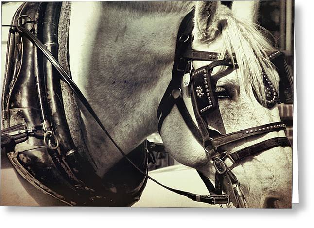 Shades Of Gray Greeting Card by Dressage Design