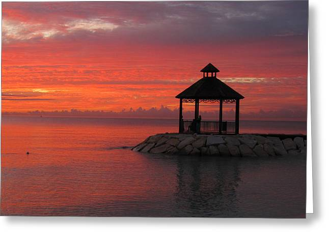 Shades Of Paradise Greeting Card by Addie Hocynec