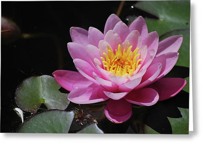 Greeting Card featuring the photograph Shades Of Pink by Amee Cave