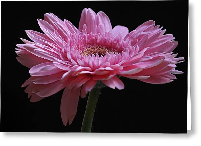 Greeting Card featuring the photograph Shades Of Pink by Juergen Roth