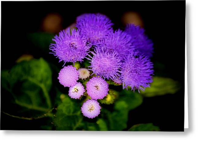 Shades Of Purple Greeting Card by Karen Scovill