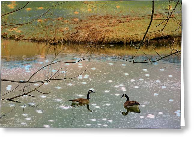 Shades Of Seasons Past Greeting Card by Jan Amiss Photography