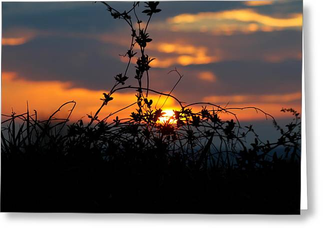 Shades Of Sun Greeting Card by Everett Houser