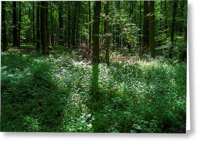 Shadow And Light In A Forest Greeting Card