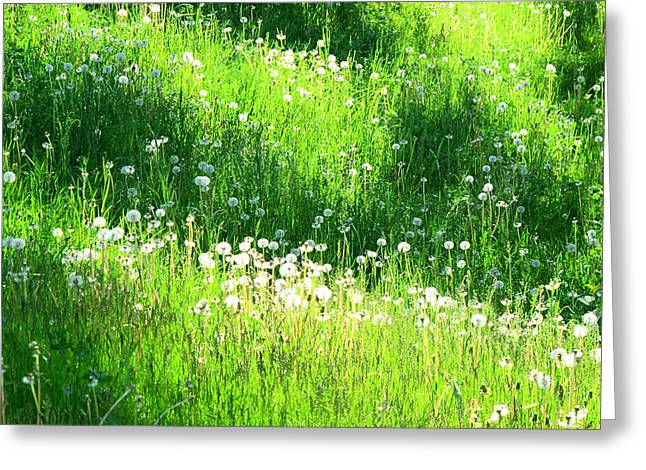 Shadow And Light On The Hill Ae Greeting Card by Lyle Crump