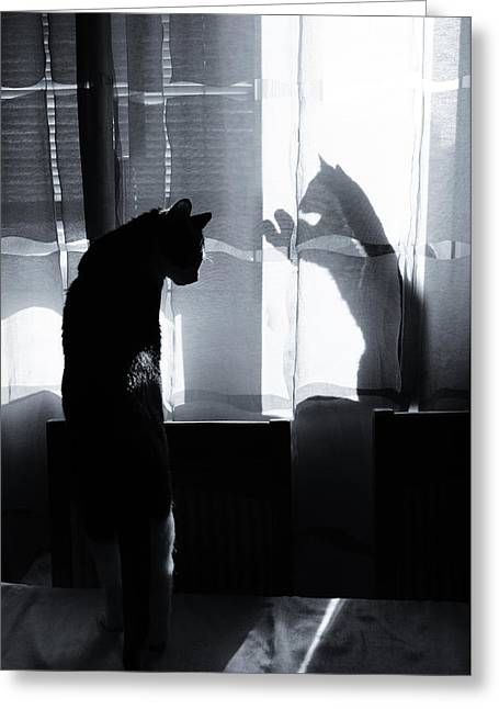 Shadow Cats Greeting Card by Cambion Art