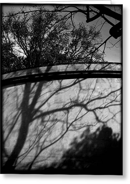 Shadow Of A Tree Greeting Card