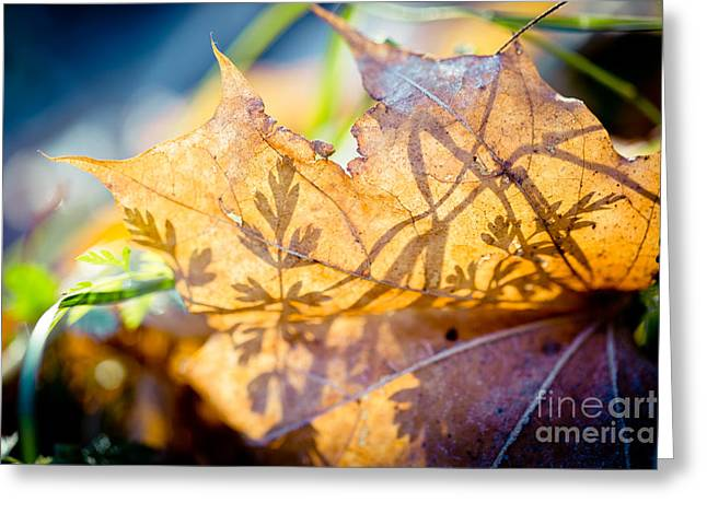 Greeting Card featuring the photograph Shadow Of Autumn  Artmif.lv by Raimond Klavins