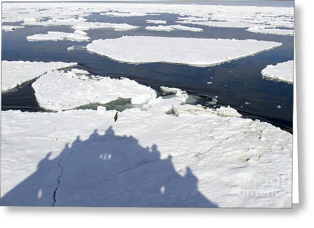 Shadow Of Cruise Ship Jamming Ice Floe Greeting Card by Karen Foley