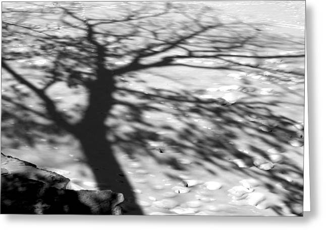 Shadow Tree  Herrick Lake  Naperville Illinois Greeting Card