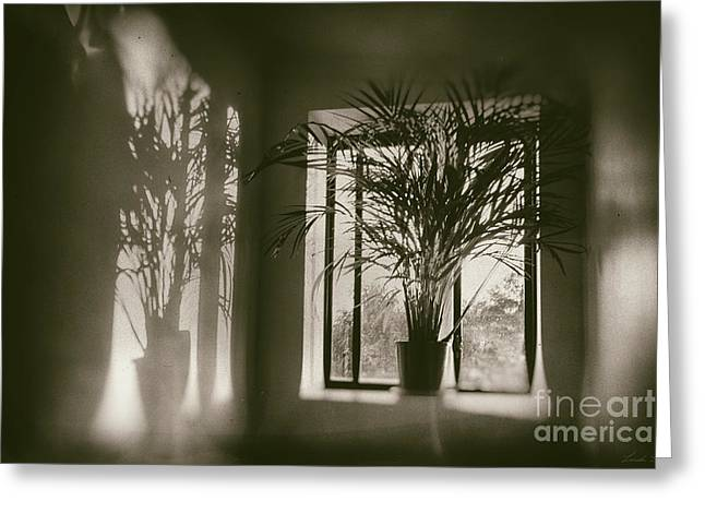Shadows Dance Upon The Wall Greeting Card