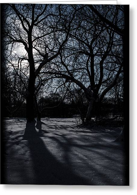 Shadows In January Snow Greeting Card