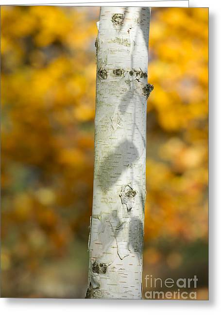 Shadows Of Autumn Greeting Card by Tim Gainey