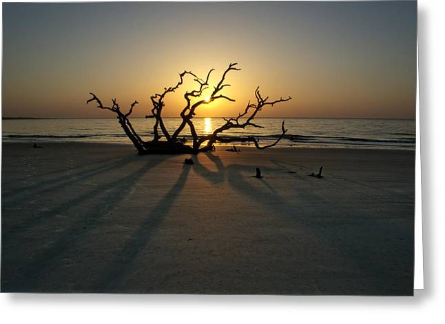 Shadows Of Driftwood Greeting Card
