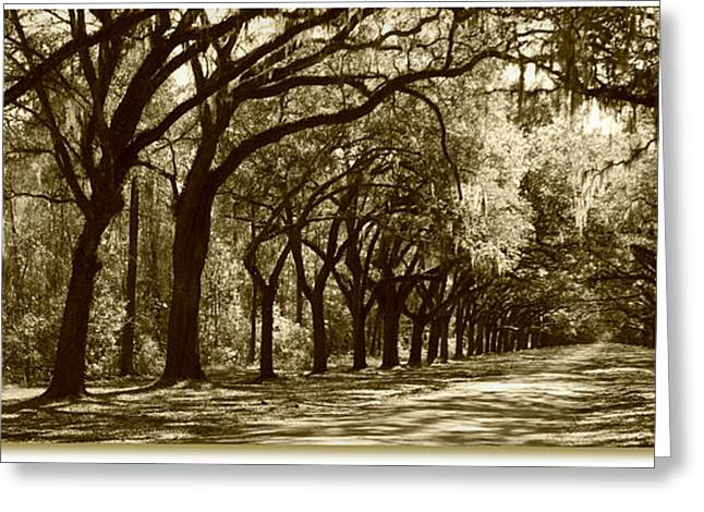 Shadows Of The South Greeting Card by Carol Groenen