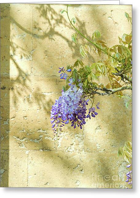 Shadows Of Wisteria Greeting Card by Tim Gainey