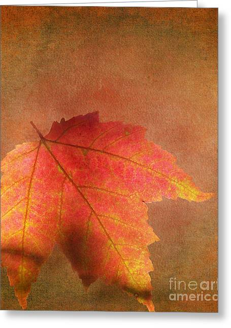 Shadows Over Maple Leaf Greeting Card by Kathi Mirto