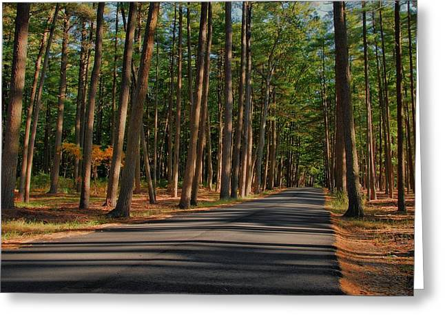 Shadows Road - Ocean County Park Greeting Card
