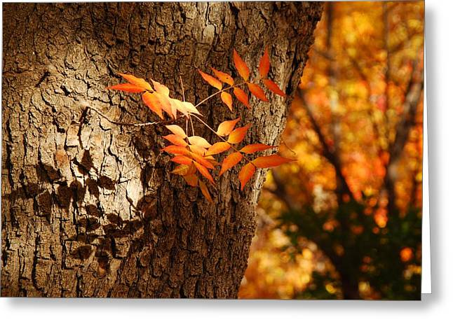 Fall Color Greeting Card by Tam Ryan