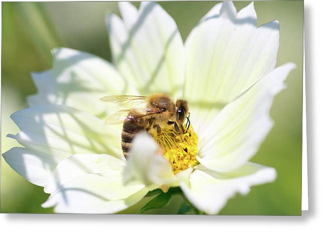 Greeting Card featuring the photograph Shadowy Bee by Brian Hale
