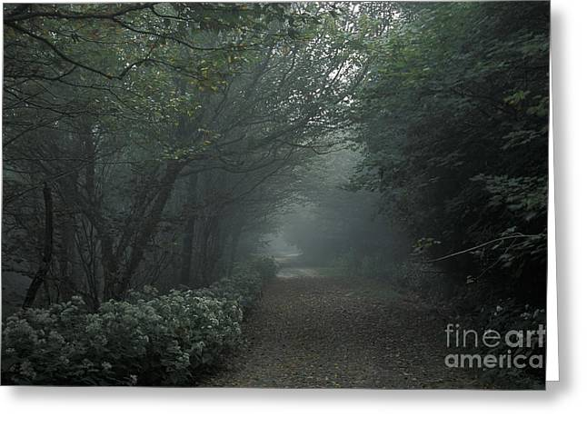 Shady Lane Greeting Card by Stan and Anne Foster
