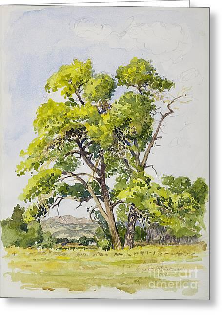 Shady Oak Tree Greeting Card by James Robert MacMillan