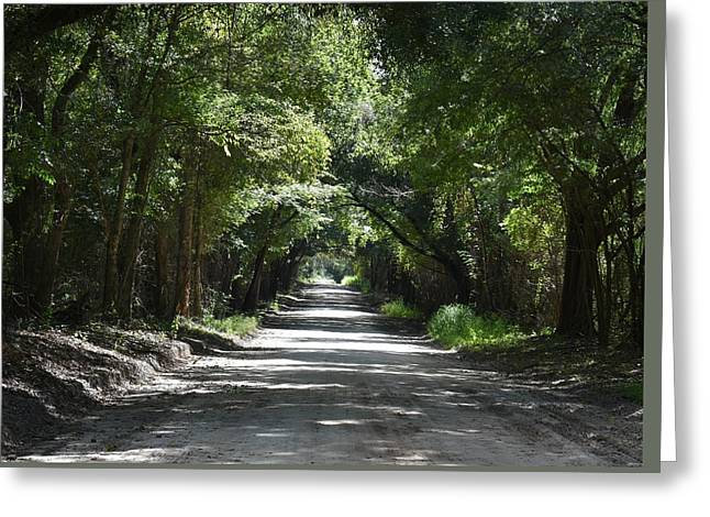 Shady Tree Lined Carpenter Road Greeting Card by rd Erickson
