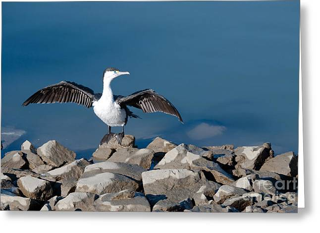 Greeting Card featuring the painting Shag Drying The Wings by Yurix Sardinelly