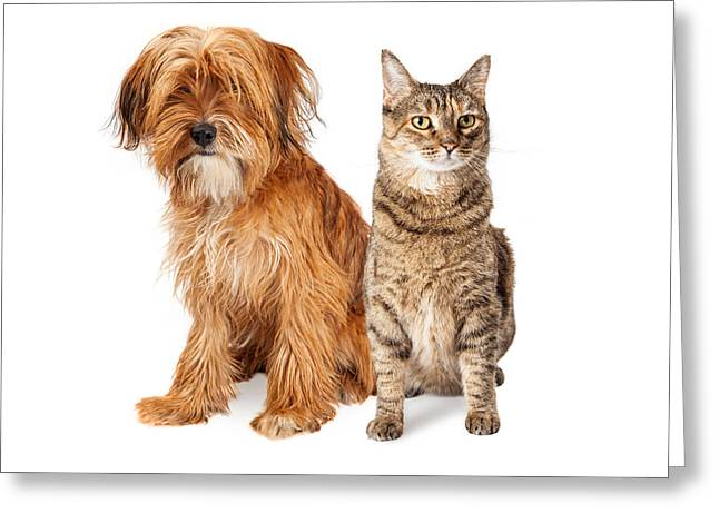 Shaggy Dog And Tabby Cat Sitting Together Greeting Card by Susan Schmitz
