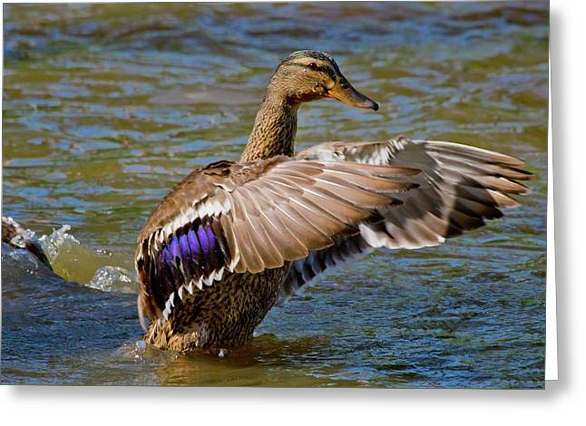 Greeting Card featuring the photograph Shake It Off by Linda Unger