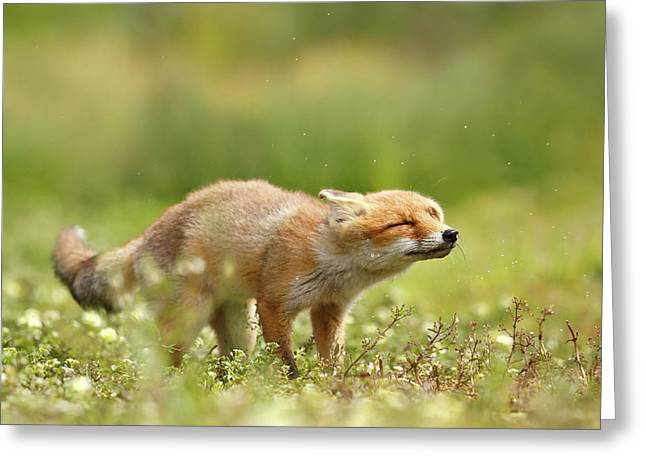 Shaking Fox Greeting Card