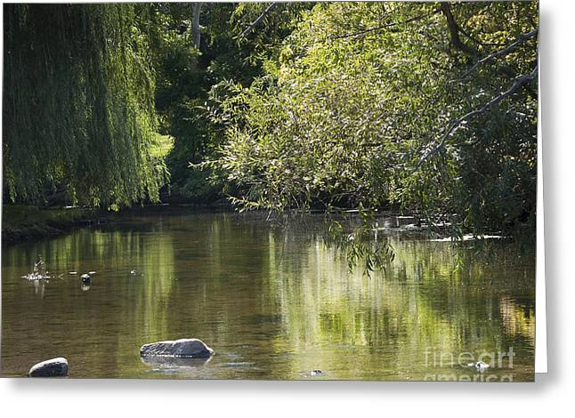 Shallow River Greeting Card by Tara Lynn