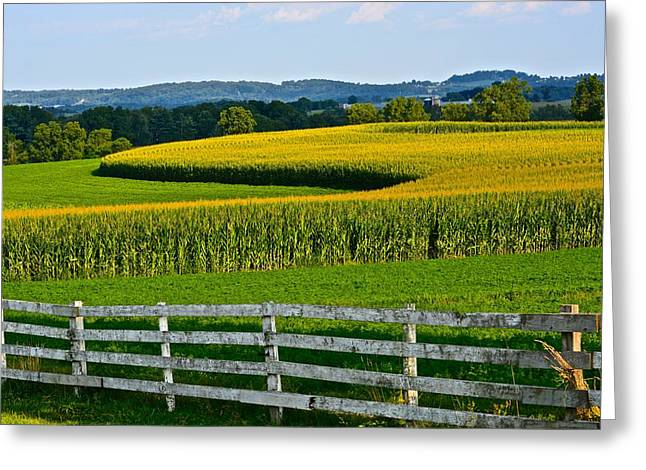 Shapely Cornfield 1 Greeting Card