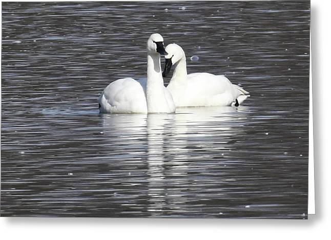 Sharing A Moment Greeting Card by Gary Wightman