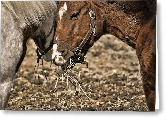 Sharing The Hay Greeting Card by JAMART Photography