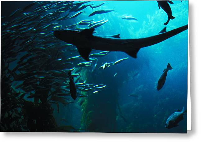 Greeting Card featuring the photograph Shark Above by Carl Purcell