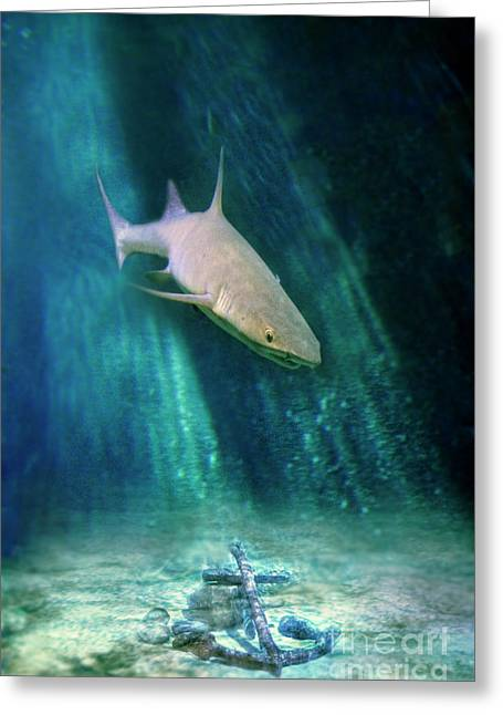 Shark And Anchor Greeting Card by Jill Battaglia