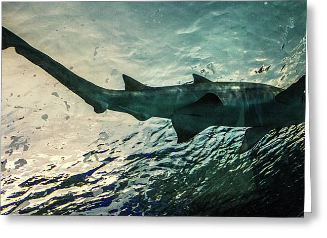 Shark Fins Greeting Card by Martin Newman