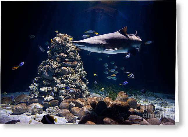 Shark In Zoo Aquarium Greeting Card by Arletta Cwalina