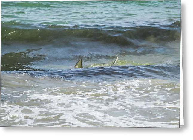 Shark Near The Shore In Atlantic Ocean Greeting Card