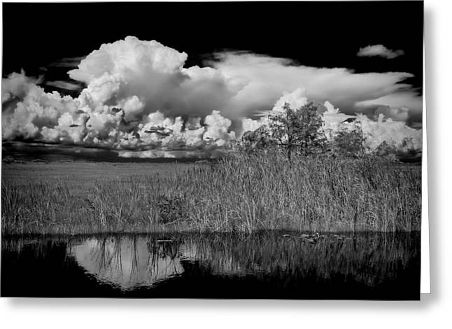 shark river slough BW Greeting Card by Rudy Umans