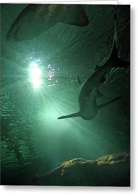Underwater Photos Photographs Greeting Cards - Shark Tank I Greeting Card by Elizabeth Hoskinson
