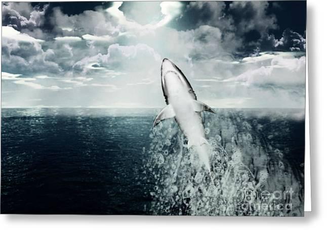 Shark Watch Greeting Card